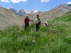Kurs3_DE_Pflanzenvielfalt in Ladakh_250x188